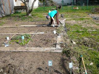 yardsharing victory garden