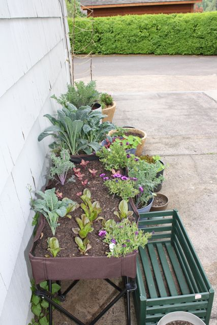 Product Instant Gardens : Gardener to farmer product review easy instant