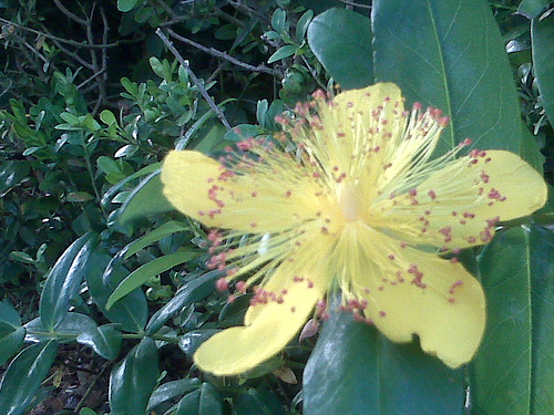 Driveway_flower