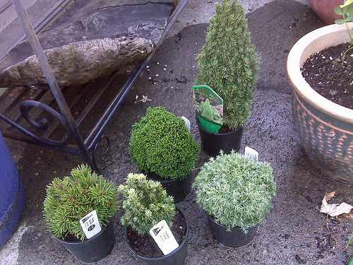 Mini_evergreen_collection